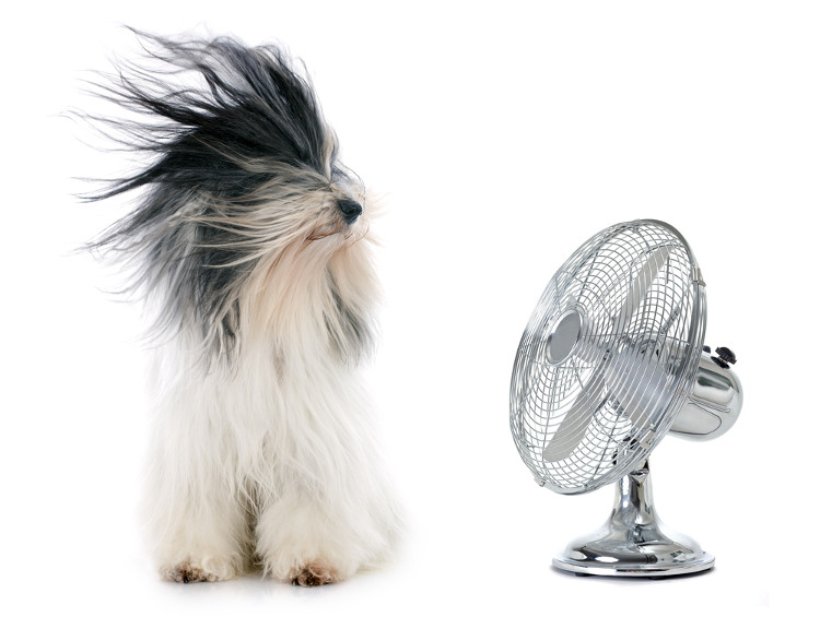 Hund und Ventilator