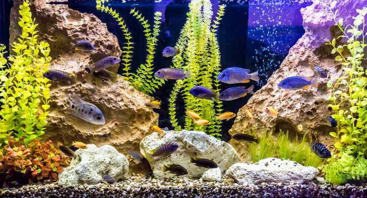 Lichtsteuerung von Aquarien