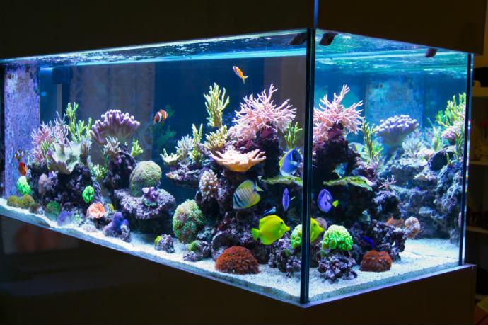Aquarium selbst bauen Tipps und Tricks  Wohnungs