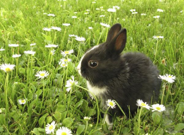 Baby Kaninchen auf einer Blumenwiese