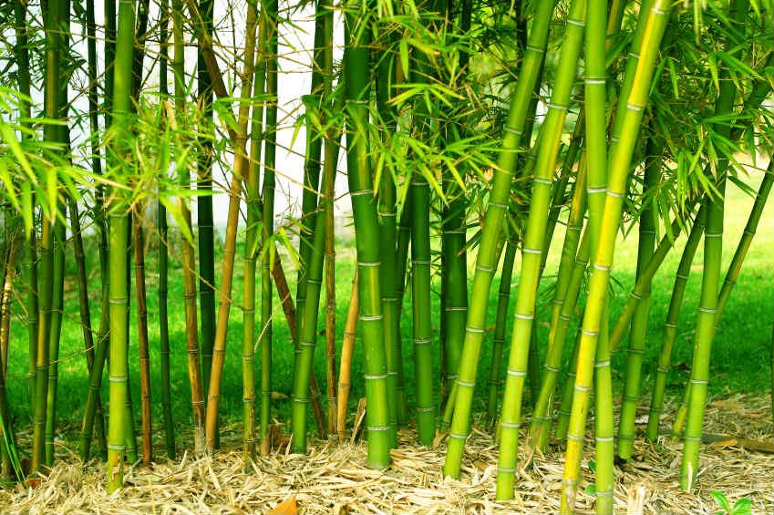 bambusparkett worauf sollte ich achten wohnungs. Black Bedroom Furniture Sets. Home Design Ideas