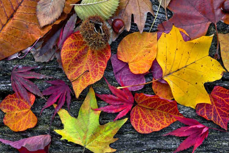 Bunter Blätter zum dekorieren