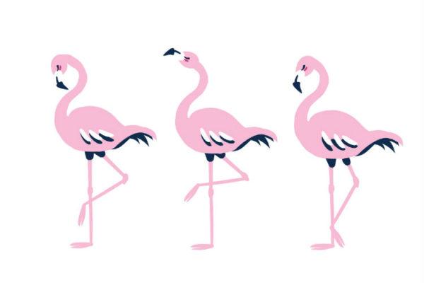 Drei Flamingos in einer Reihe