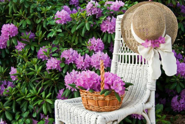 Ein Gartenstuhl vor einer großen Blume.