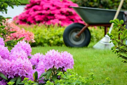 Blumen aussäuen und anpflanzen im Garten