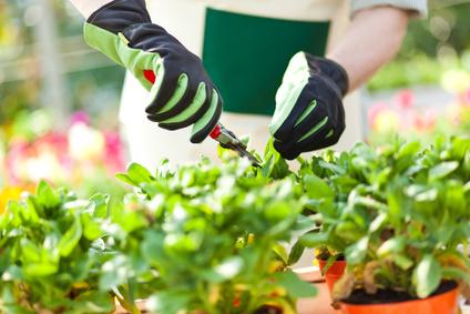 Wenn Sie Ihren Garten teilen möchten, stellen Sie klare Regeln auf