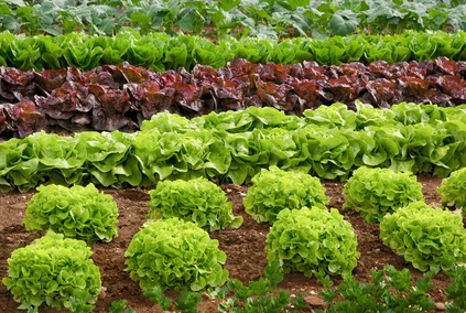 Wer seinen Garten gegen Ungeziefer schützen will, kommt auch ohne chemische Mittel aus