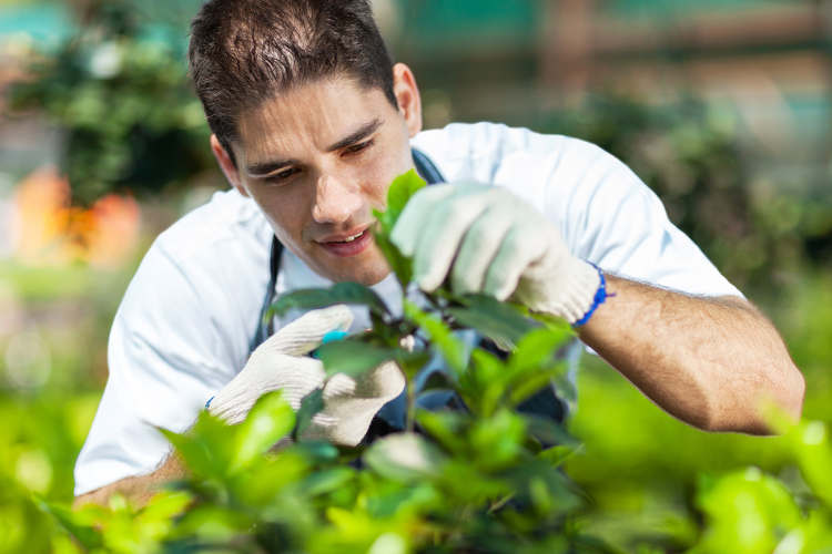 Garten Schädlingsbekämpfung