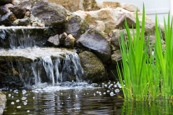 Naturteich in Garten