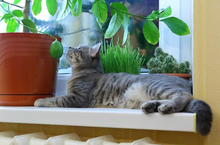 Katze liegt auf Fensterbank und beobachtet Pflanze