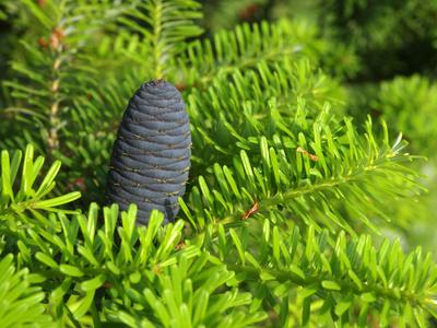 Mit immergrünen Pflanzen sorgen Sie auch im Winter für einen lebendigen Garten