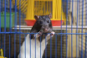 Hamster in seinem Käfig