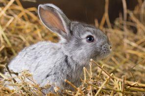 Hasenstall-Ideen – So peppen Sie den Kaninchenstall auf