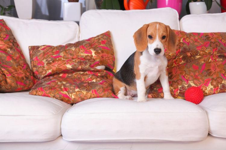 hunde und katzen in der wohnung halten wohnungs. Black Bedroom Furniture Sets. Home Design Ideas