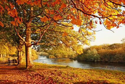 Die Farbenvielfalt des Herbstes ist atemberaubend