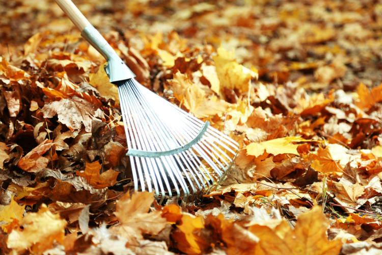 Herbstlaub mit Harke