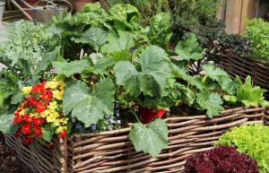 Hochbeete für Obst und Gemüse
