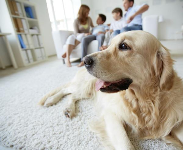 Hund mit seiner Familie im Wohnzimmer