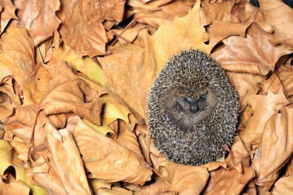 überwinternde Tiere Garten