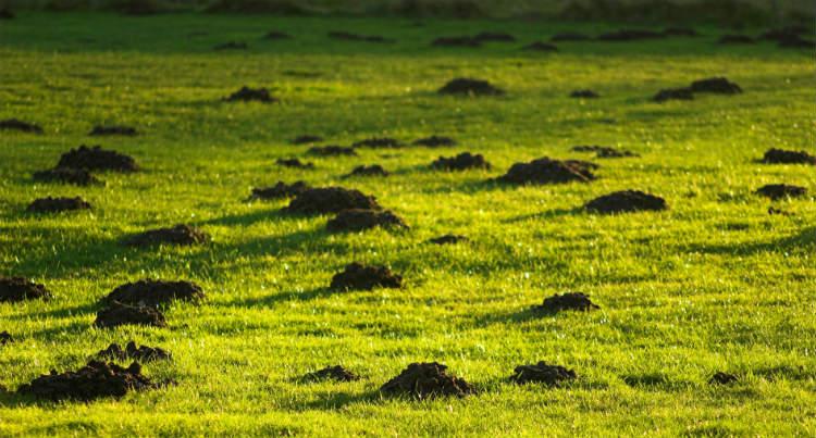 Maulwurfshügel im eigenen Garten