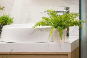 Pflanzen im Bad – Welche Pflanze ist die richtige und wie pflegt man sie?