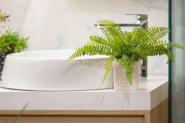 Farn eignet sich ideal als Pflanze für das Bad