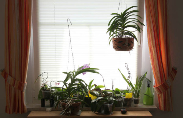Plissees im Fenster