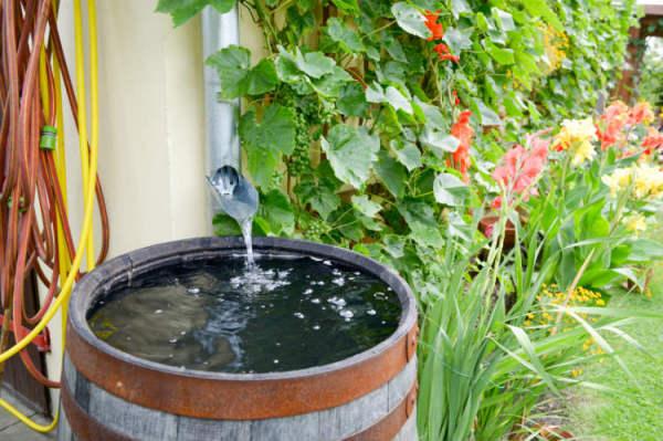 Regenwasser effektiv nutzen