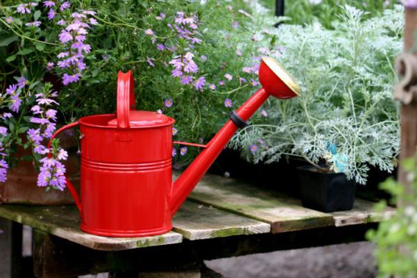 Rote Gießkanne im Garten