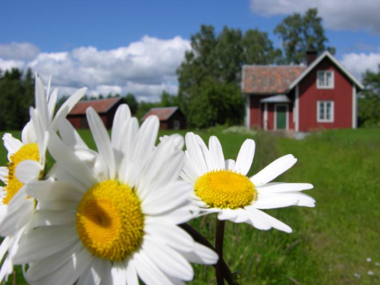 Schwedischer Garten