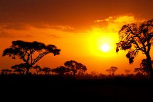 Afrikanisch Dekorieren: Sonnenuntergang Savanne