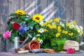 Sonniger Balkon: Welche Balkonblumen vertragen viel Sonne?