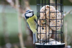 Vögel richtig füttern – Wie Sie die Piepmätze gut durch den Winter bringen