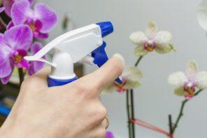 Wie bringe ich Orchideen zum Blühen? – Pflegetipps rund um die Orchidee