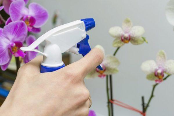 Frauenhand besprüht Orchideen mit Wasser