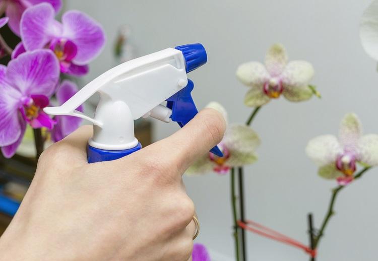 Etwas Neues genug Wie bringe ich Orchideen zum Blühen? - Pflegetipps rund um die #VF_34