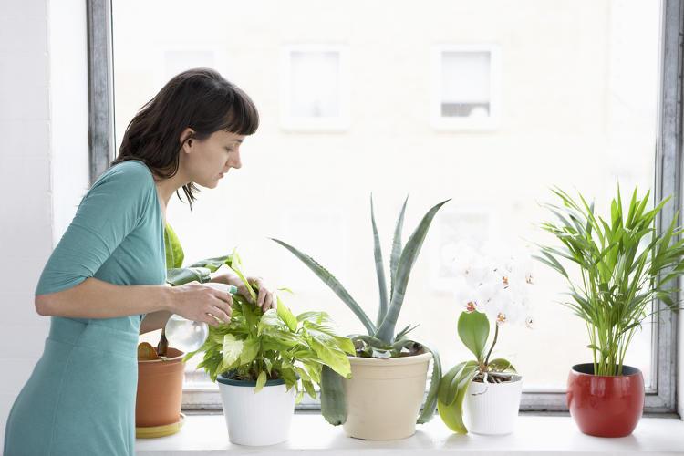 Pflegehinweise Zimmerpflanzen