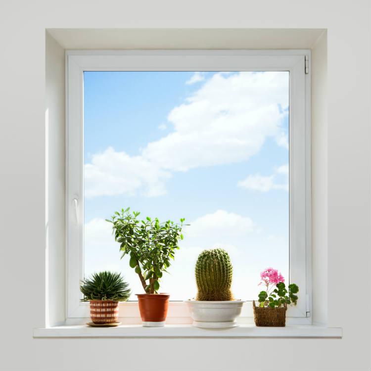 Top 10 Das Sind Deutschlands Beliebteste Zimmerpflanzen Wohnungs