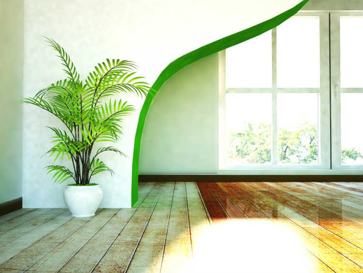 Zimmerpflanzen bereichern die Wohnung in vielerlei Hinsicht