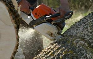 Baumstumpfskulptur wird von einem Mann mit einer Kettensäge geschnitzt