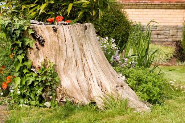 Baumstumpf mit Pfalnzen steht auf einer Rasenfläche