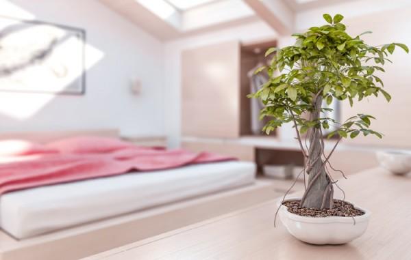 Bonsai in einem nach Feng Shui ausgerichtetem Raum