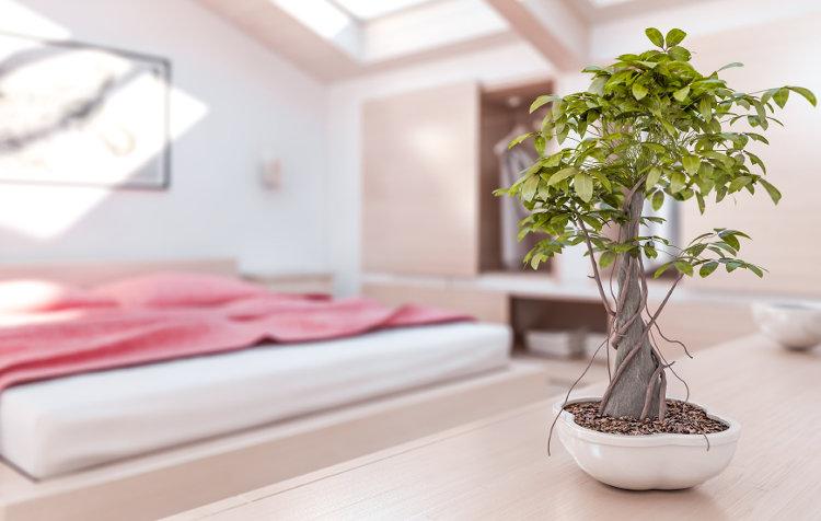 feng shui in deutschen wohnzimmern wohnungs. Black Bedroom Furniture Sets. Home Design Ideas