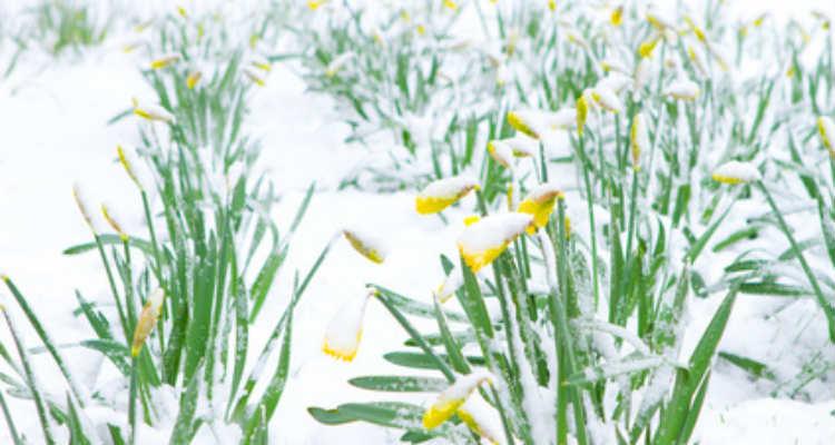 So bleibt der Garten im Winter schön