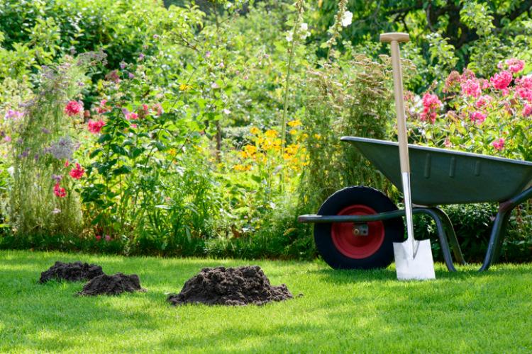 Maulwurfshügel im Garten