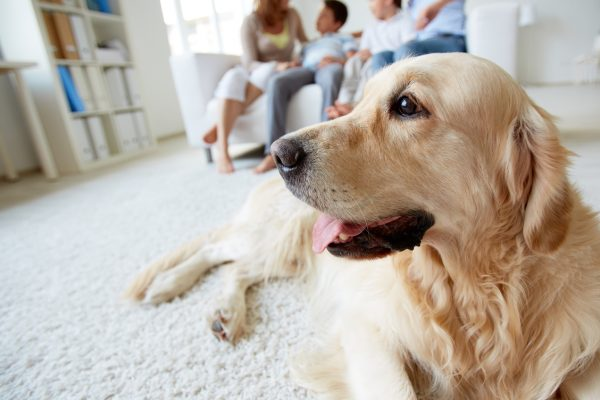 Hund liegt auf einem Teppich, im Hintergrund ist seine Familie zu sehen