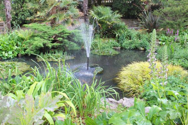 Das Foto zeigt einen dicht bepflanzten Gartenteich mit einer Wasserfontäne in der Mitte