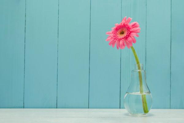 Eine pinke Blume steht in einer gläsernen Vase vor einer blauen Holzwand