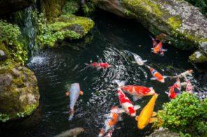 In 3 Schritten zum klaren Wasser im Gartenteich
