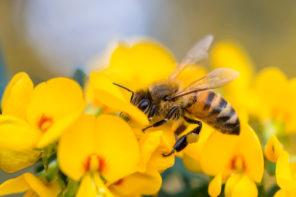 Den Garten bienenfreundlich gestalten: Tipps & Tricks